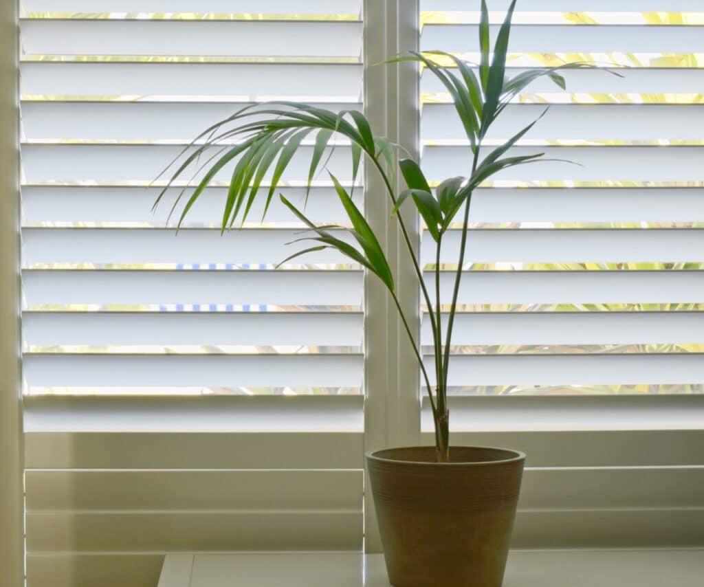 Plantation Shutters Window shutters Shutters Sydney